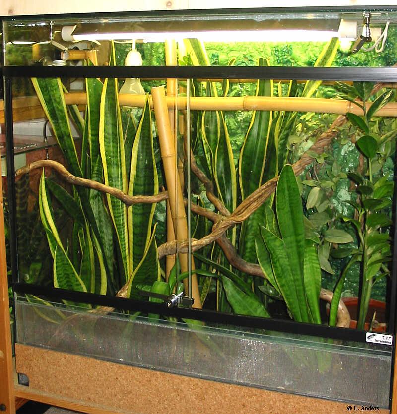 Terrarium der Maße 80/50/80 für eine Gruppe (1,2) Phelsuma guimbeaui