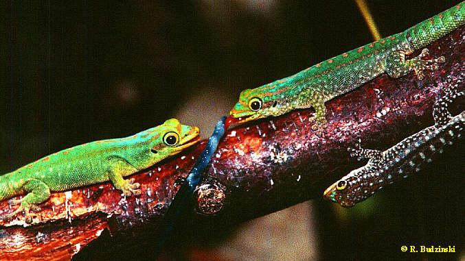 Unterschiedliche Färbungsstadien von  Jungtieren in der Gruppenaufzucht