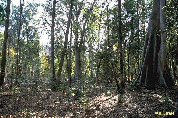 typischer Trockenwald der Flußränder u. Berghänge